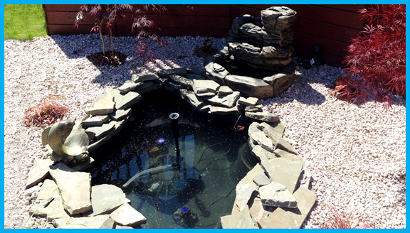 Pond Set Up and Maintenance